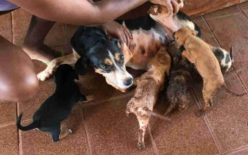 Bombeiros resgatam quatro filhotes de cachorro de dentro de fossa em Caldas Novas, GO