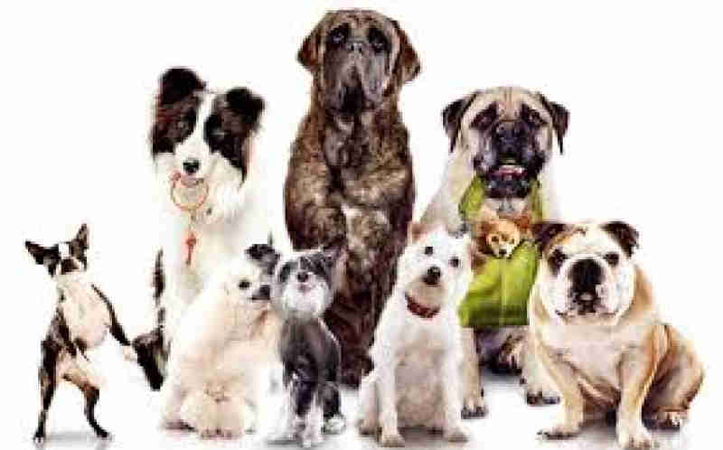 Projeto propõe criação de Fundo de Proteção e Bem-Estar Animal em Goiás