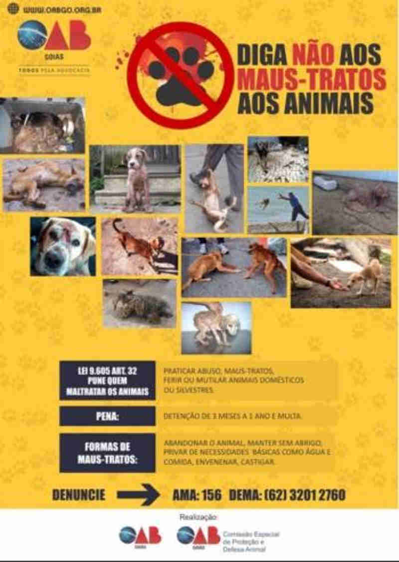 OAB Goiás lança a campanha contra maus-tratos de animais