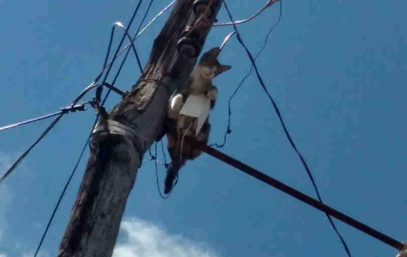 Bombeiros resgatam gato de poste em São Luís de Montes Belos, GO