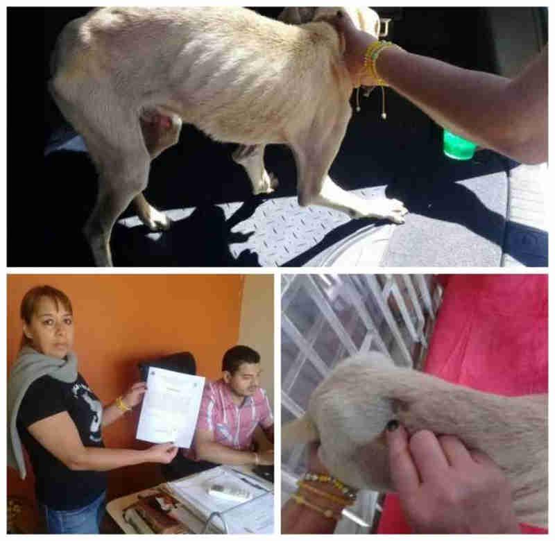 Juiz condena mulher que maltratava seu cão em Honduras