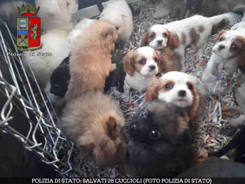 Polícia italiana salva 26 cachorros com menos de dois meses