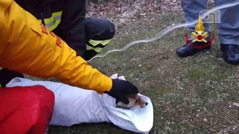 Raposa é resgatada após ficar presa em lago artificial na Itália