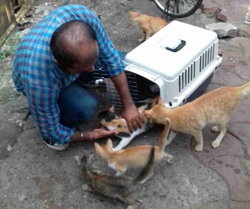 De agora em diante, ativistas dos animais na Índia não possuem identidades oficiais