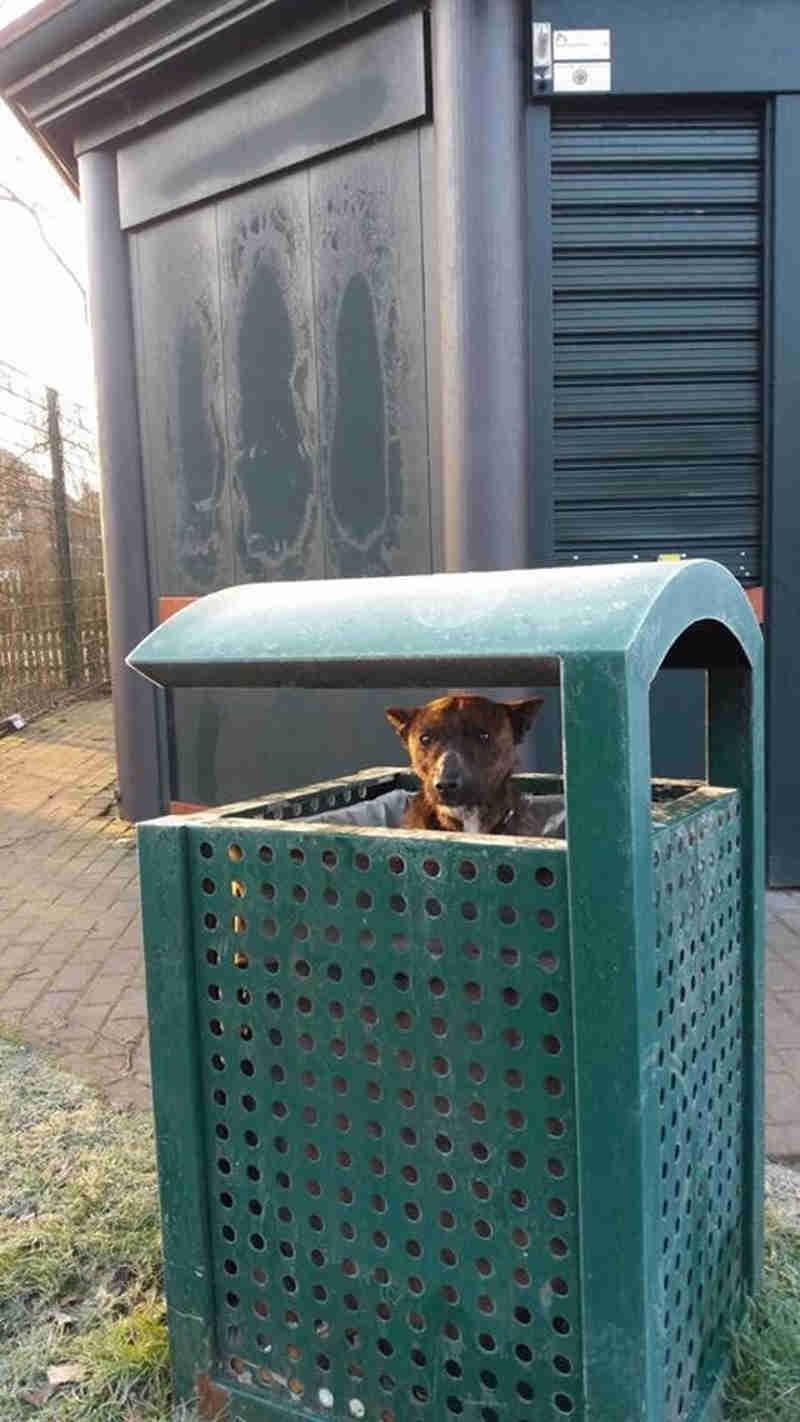 Resgatistas encontram um cachorro triste e sozinho dentro de uma lata de lixo