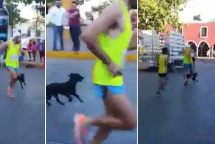 Maratonista agride cachorro com chute durante corrida; vídeo