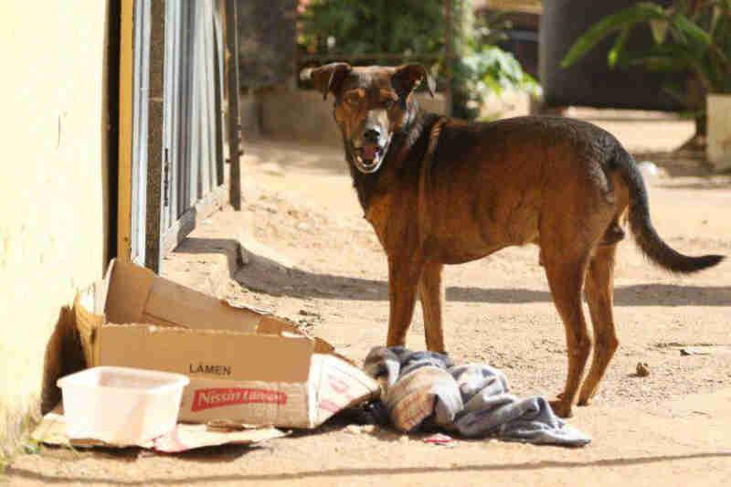 Programa Vila Viva, da Prefeitura de Belo Horizonte (MG), vira foco de abandono de animais