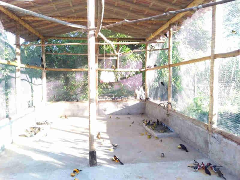 Mais de 200 pássaros são devolvidos à natureza em Berilo, no Vale do Jequitinhonha, MG