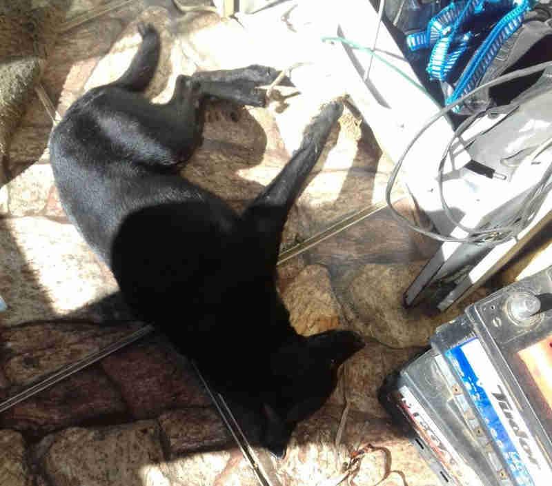 Envenenamento de cães deixa moradores indignados em Carmo de Paranaíba, MG