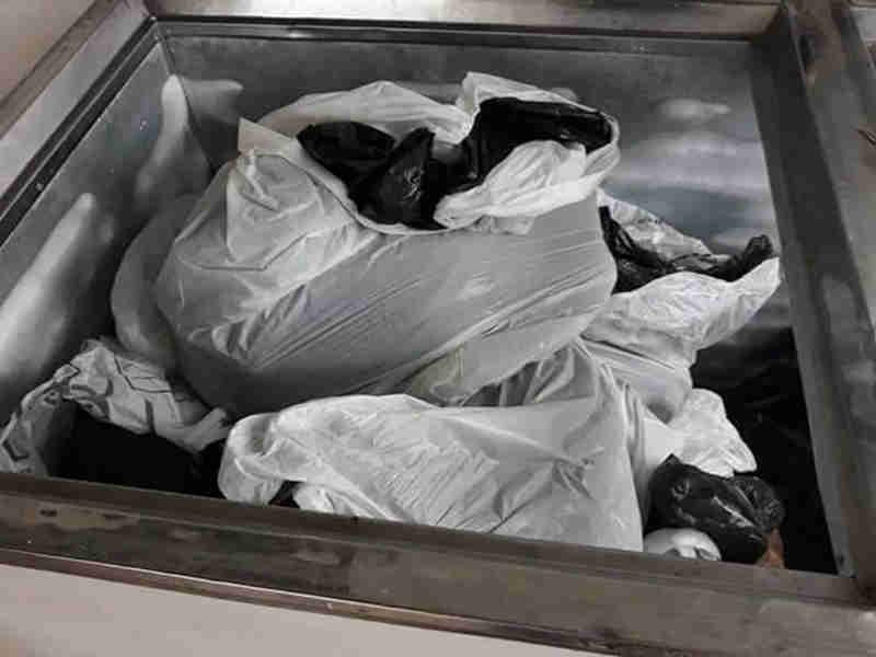 Ministério Público instaura processo para investigar morte de cães em Divinópolis, MG