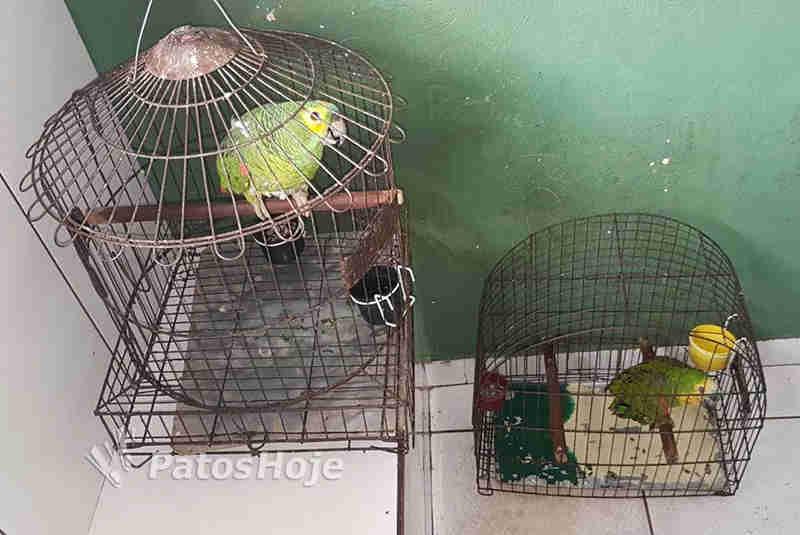 Os policiais fizeram a apreensão dos dois papagaios.