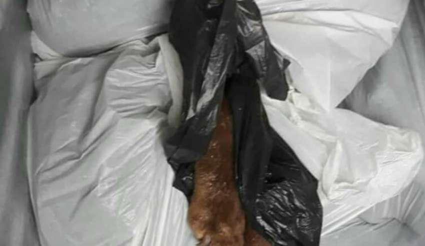 Cachorros mortos dentro de freezer: PM e MP investigam matança animal em Minas