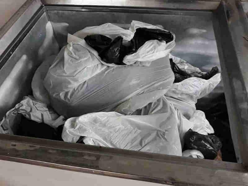 Cães são encontrados mortos dentro de freezer em Divinópolis, MG