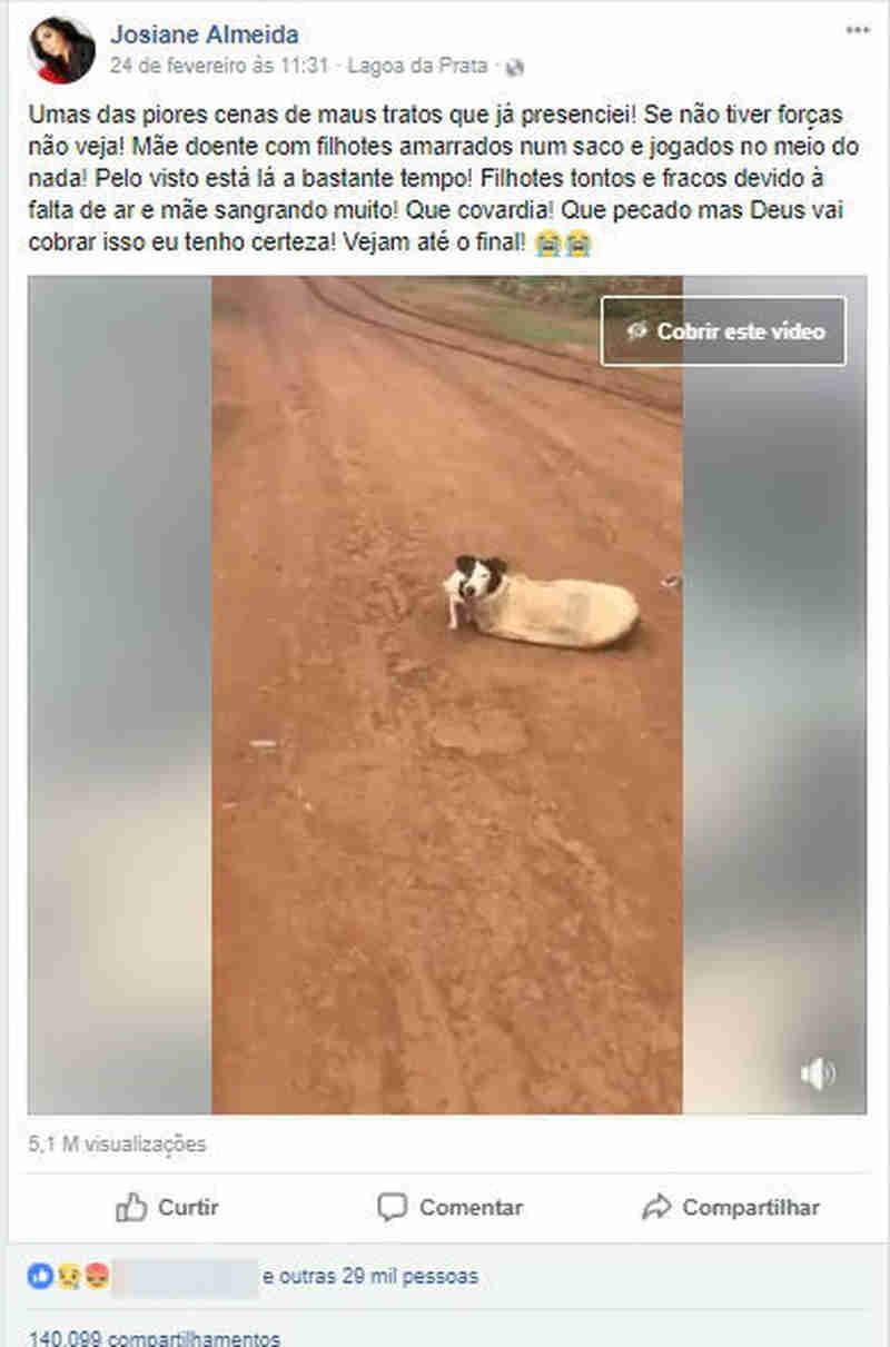 Vídeo mostrando resgate de cadela e filhotes amarrados dentro de saco em MG viraliza na internet