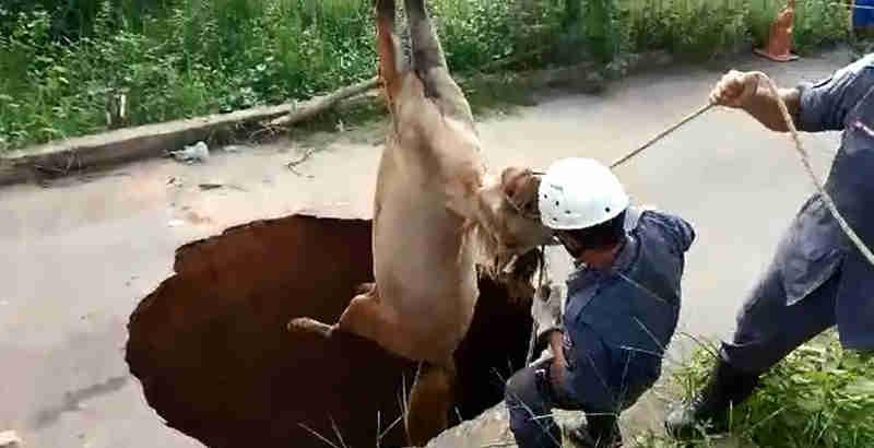 Cavalo é resgatado de dentro de cratera no meio da rua em Muriaé, MG; veja vídeo