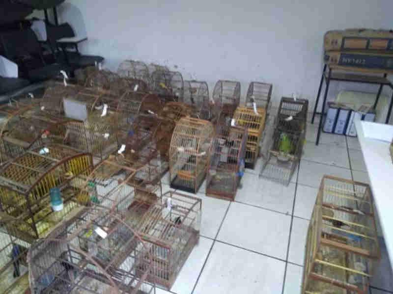 Polícia Ambiental deflagra operação de combate ao tráfico de animais silvestres na região de Paracatu, MG