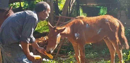 O animal está com vários ferimentos pelo corpo e apresenta um inchaço no olho.