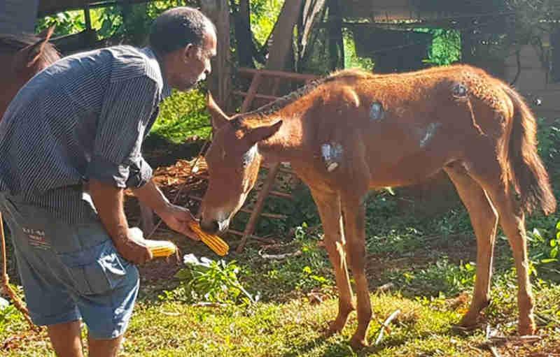 Família pede ajuda de veterinário para salvar potrinho atropelado no bairro Jardim Esperança, em Patos de Minas, MG