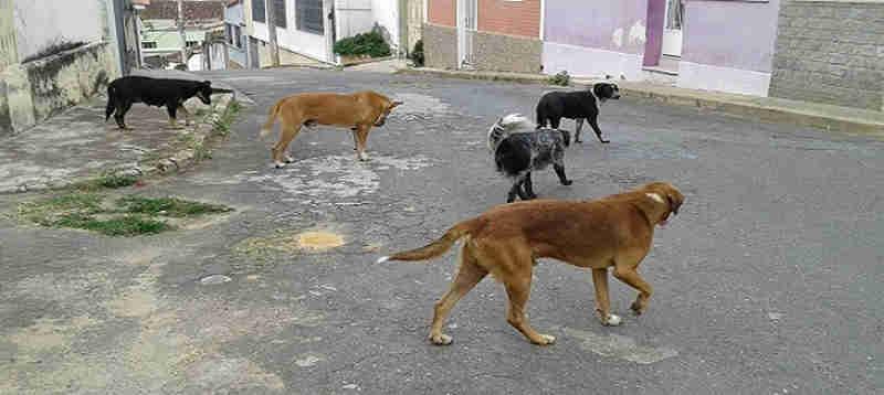 Aprovado Projeto de Lei que cuida dos cachorros de rua em Ponte Nova, MG