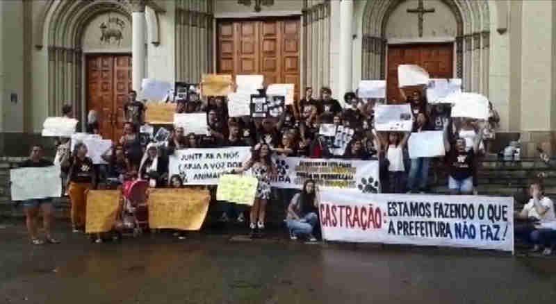 Voluntários reclamam de falta de apoio com cuidados aos animais abandonados em Pouso Alegre, MG