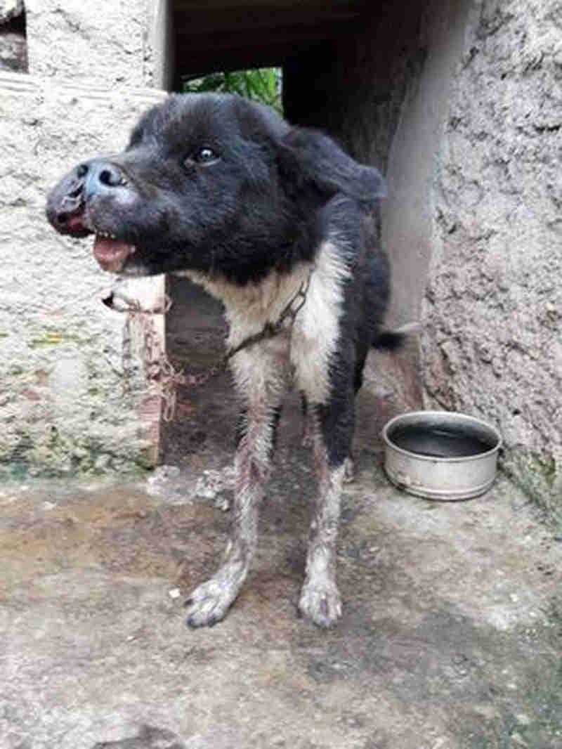 Cão é resgatado com indícios de maus-tratos em Sabará, MG