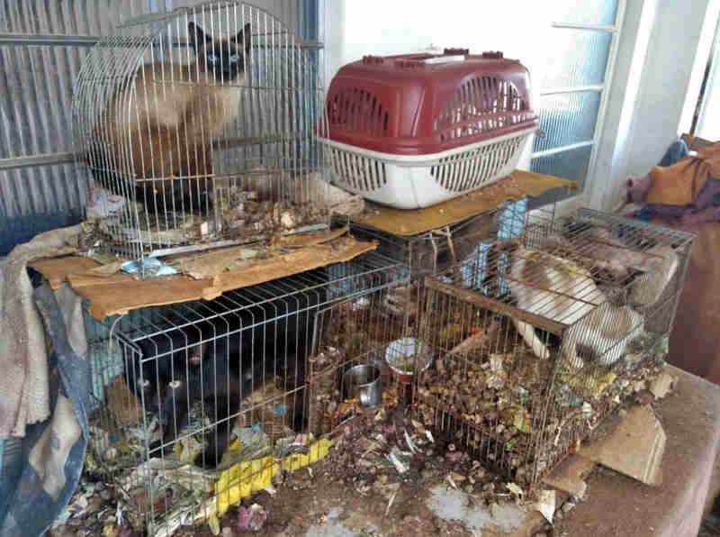 Mulher é presa por manter gatos, cachorros e até galo presos em gaiolas em São Lourenço, MG