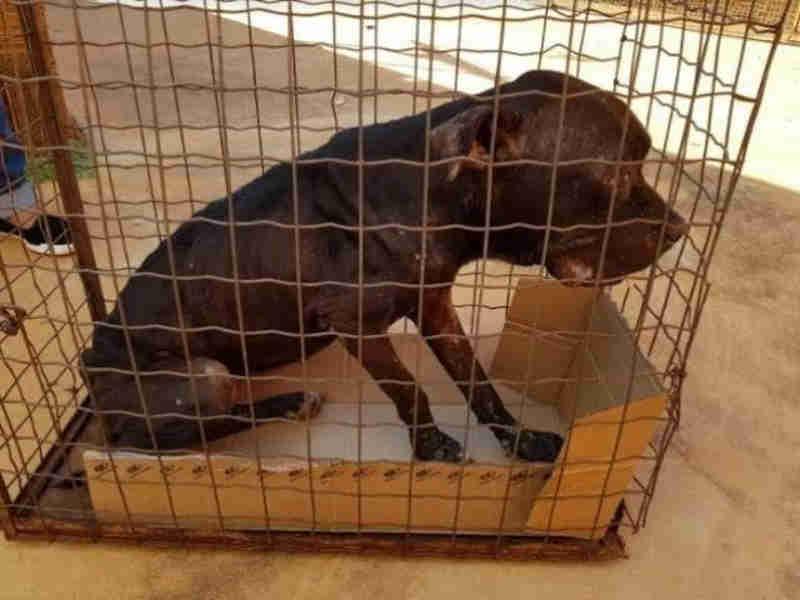 Alerta: quem não cuida de animal pode ser multado em até R$ 2,5 mil em Campo Grande, MS