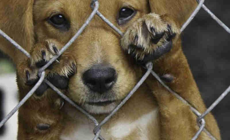 Mulher é denunciada por agredir cachorro com vassouradas