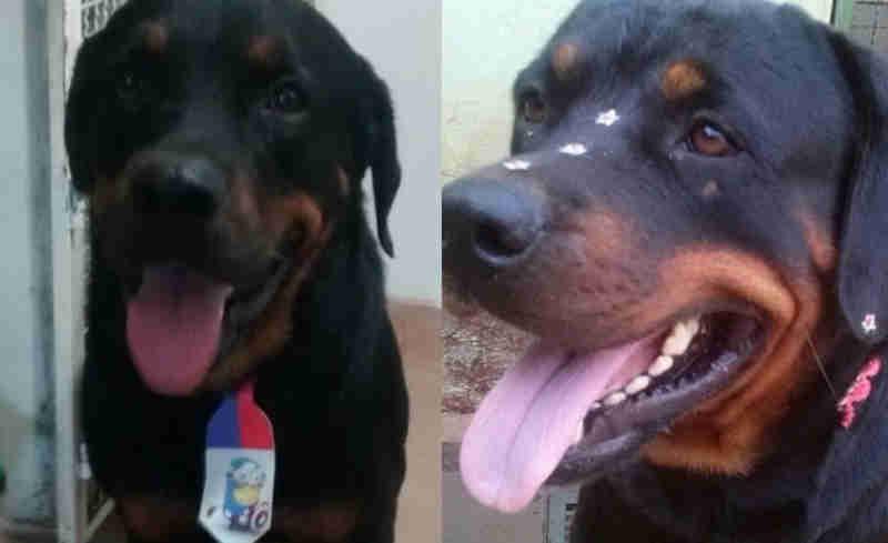 Cães são mortos por envenenamento em chácara em Paranaíba, MS