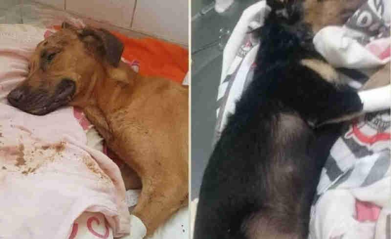 Ativistas organizam protesto no Centro de Três Lagoas (MS) contra morte de cães