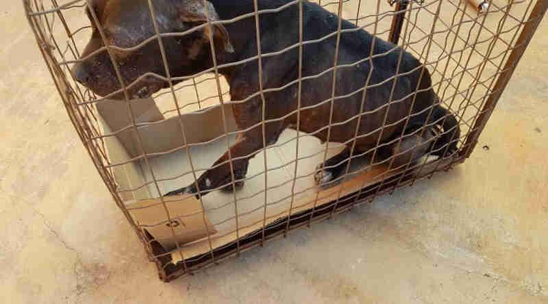 Mulher é multada em R$ 3 mil por mudar de endereço e abandonar cachorro na antiga casa em MS