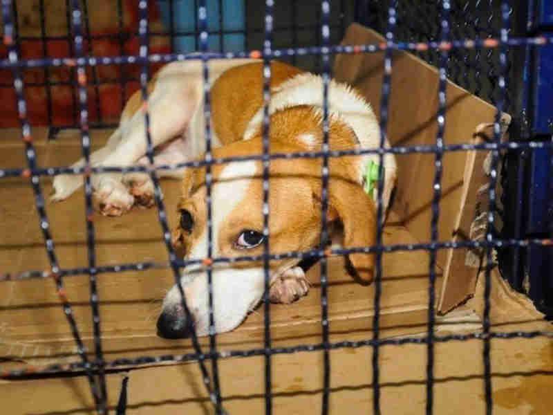 Prefeitura faz programa para castrar 800 animais e lança UPA Veterinária em Campo Grande, MS