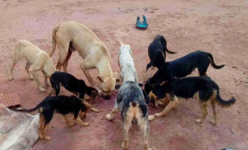 Cães são abandonados sem água e comida em Dourados (MS); eles precisam de um lar