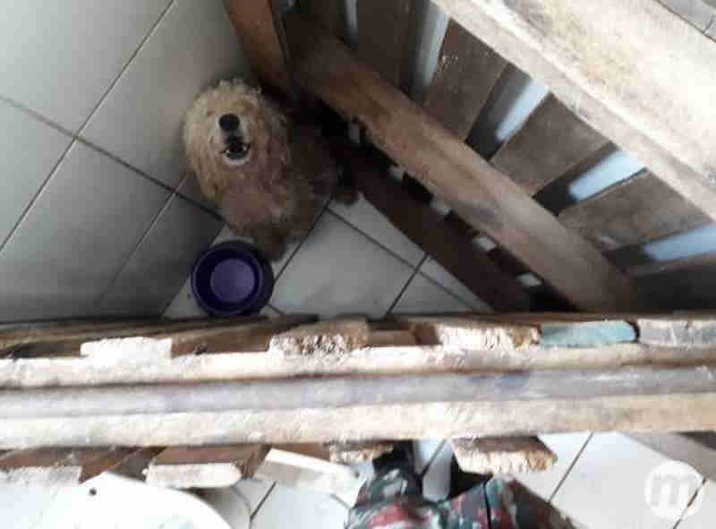 PMA resgate 4 cães que viviam em 'caixas' e multa tutor em R$ 2 mil