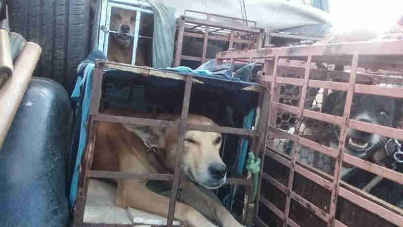 Quatro pessoas são detidas por confinar cães em caixas, em Patos, PB