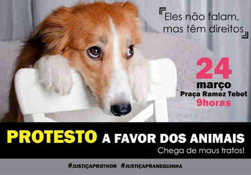 Protetoras de Três Lagoas (MS) realizam manifesto a favor dos animais neste sábado