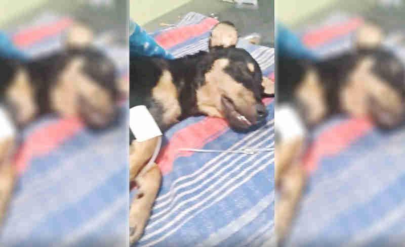 Morre cadela agredida com paulada na cabeça em Três Lagoas, MS