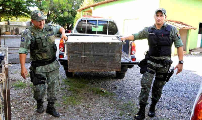 Polícia Militar Ambiental prendeu 547 pessoas e resgatou 670 animais em MT