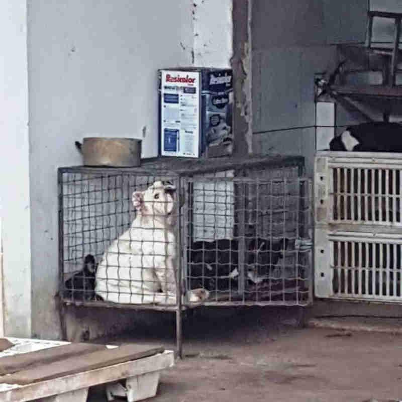 ONG e órgãos públicos atuam em casos de maus-tratos a cães em Alta Floresta, MT