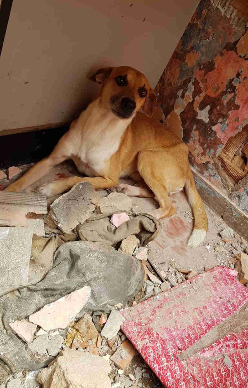 Cães e gatos resgatados de escombros de casa demolida com animais dentro estão internados e precisam de lar em Cuiabá, MT