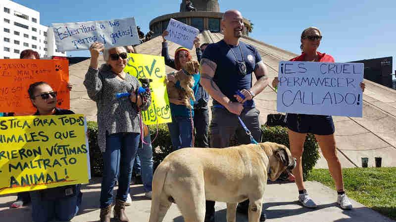 México: Ativistas resgatam cachorros baleados em Tijuana e realizam protesto em defesa dos animais