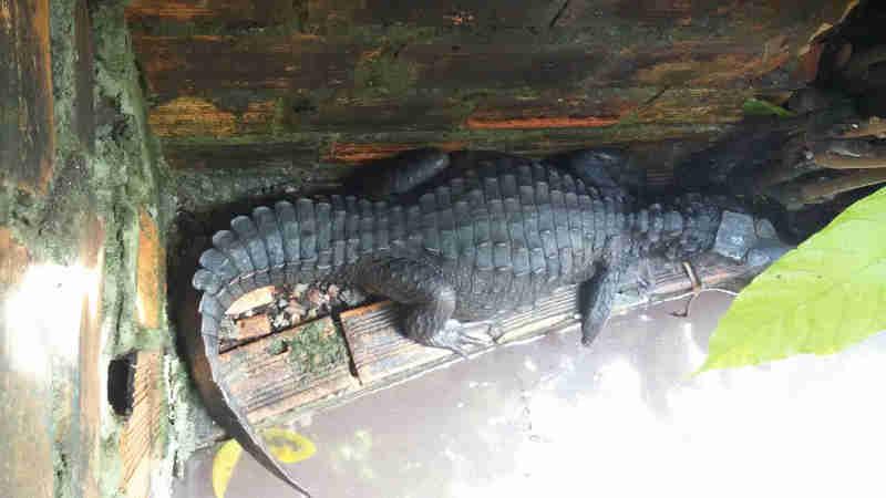 Homem é flagrado com zoológico particular com 23 animais silvestres em Ananindeua, PA