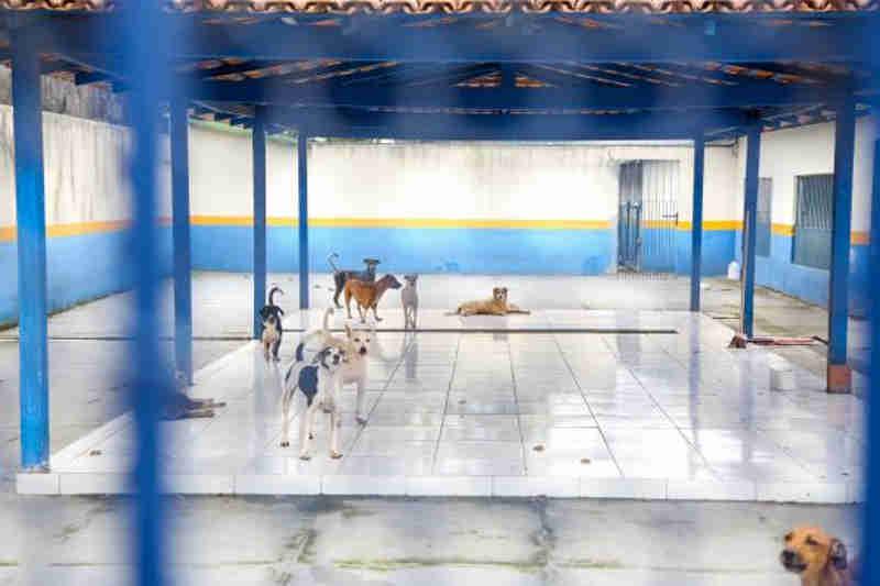 Prefeitura de Belém (PA) castra mais de 4 mil animais e viabiliza adoção de 800 em dois anos