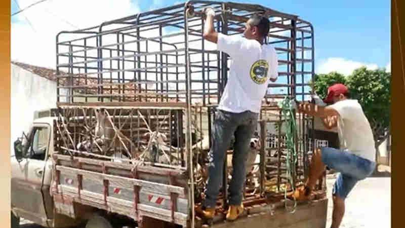 Cães foram sacrificados no dia 6 de março. (Foto: Reprodução/TV Cabo Branco)