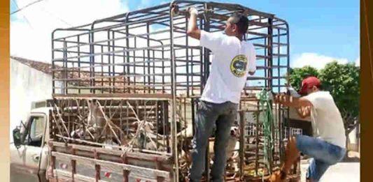 Cães foram sacrificados pela prefeitura de Igaracy, Sertão da Paraíba. (Foto: Reprodução/TV Cabo Branco)