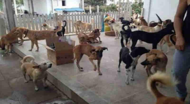 Centro de Zoonoses de Campina Grande (PB) suspende castração por falta de anestésico