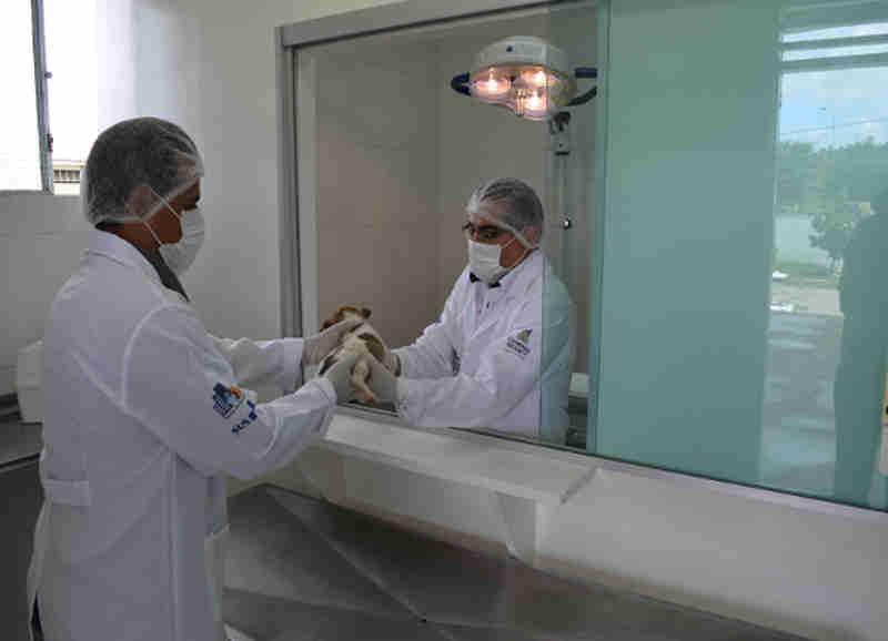 Prefeitura de Campina Grande (PB) retoma castrações de cães e gatos na próxima semana