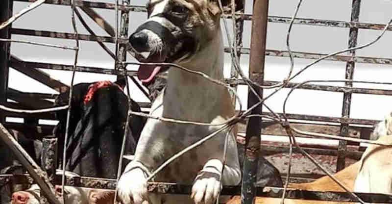 Perícia aponta morte violenta de 31 cachorros em Igaracy, PB