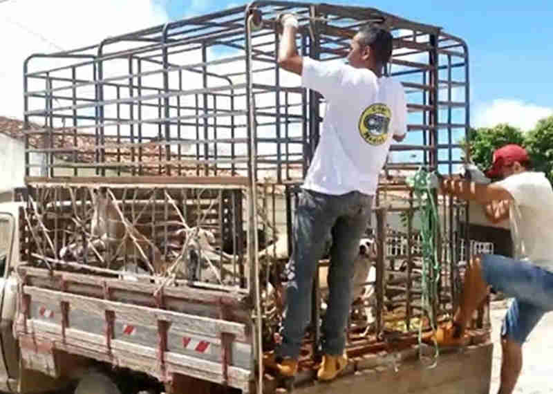 Mais de 30 cachorros são sacrificados por prefeitura em Igaracy, Sertão da PB
