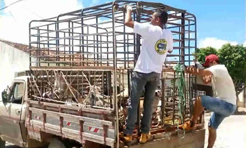 Secretário que ordenou matança de cães em Igaracy, PB, é afastado do cargo